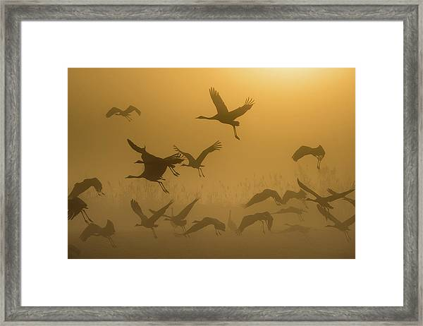 Sunrise With Cranes Framed Print