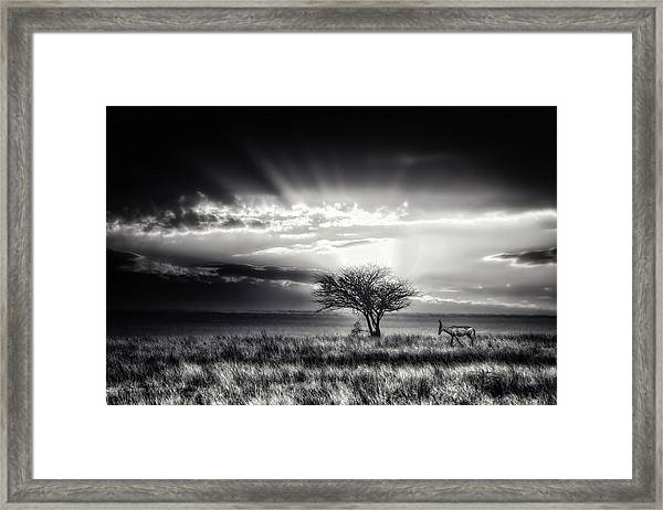 Sunrise With Hartebeest Framed Print by Piet Flour