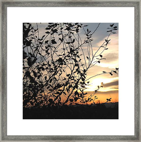 Sunset And Nature's Silhouette Framed Print