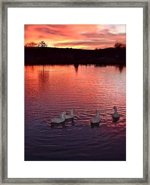 Sunset At Duckpond Framed Print