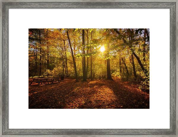 Sunset Forest Framed Print