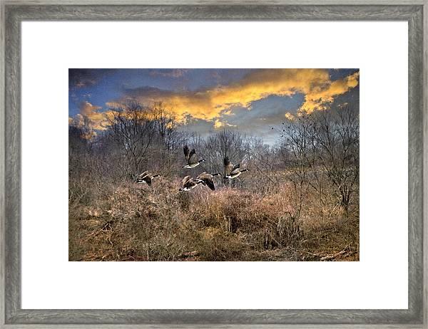 Sunset Geese Framed Print