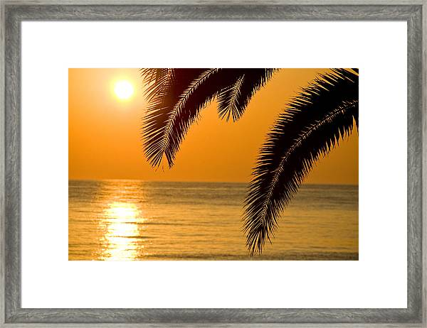 Framed Print featuring the photograph Sunset Golden Color With Palm by Raimond Klavins