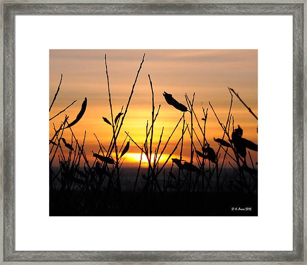 Sunset In Half Moon Bay Framed Print