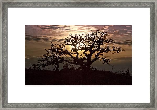 Sunset Oak Framed Print