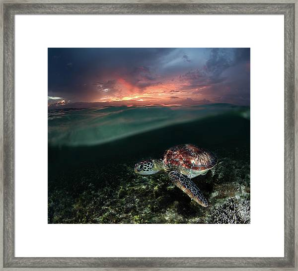 Sunset Swim Framed Print by Andrey Narchuk