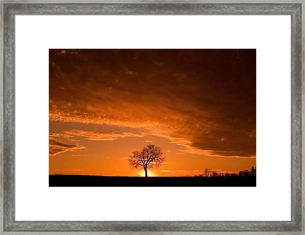 Sunset Tree Framed Print