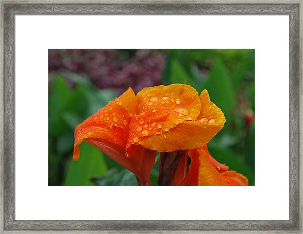 Sunshine From Within Framed Print