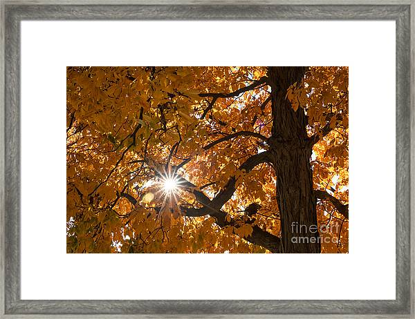 Sunshine Gold Framed Print
