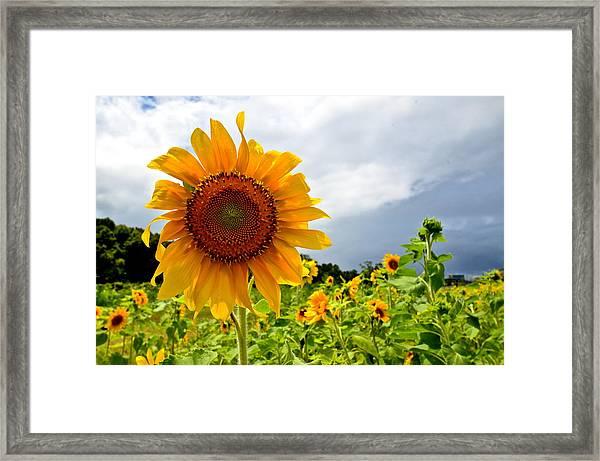 Sunshine On A Cloudy Day Framed Print