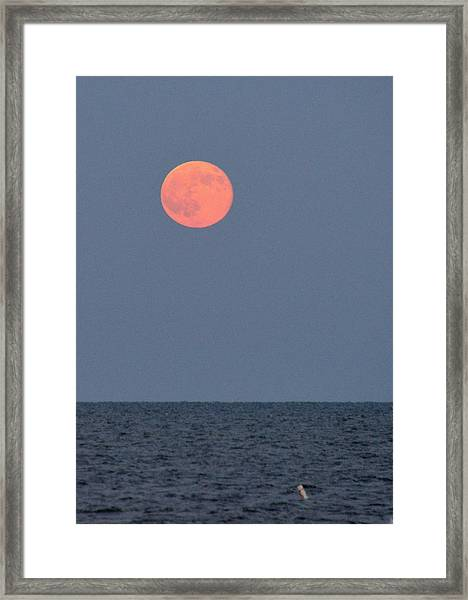 Supermoon Over Nantucket Sound Framed Print