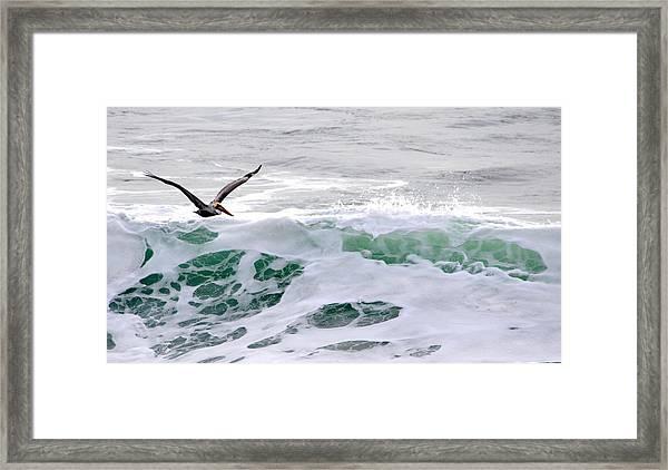 Surf N Pelican Framed Print