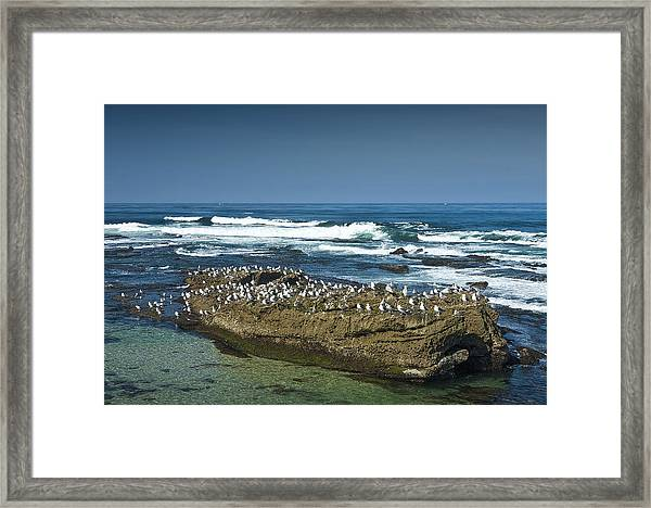 Surf Waves At La Jolla California With Gulls Perched On A Large Rock No. 0194 Framed Print