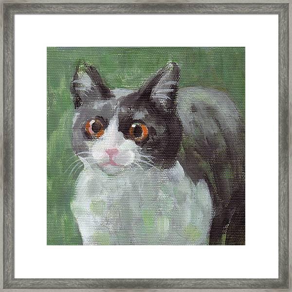 Surprised Cat Framed Print