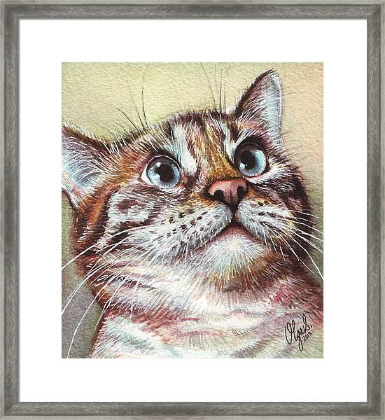 Surprised Kitty Framed Print