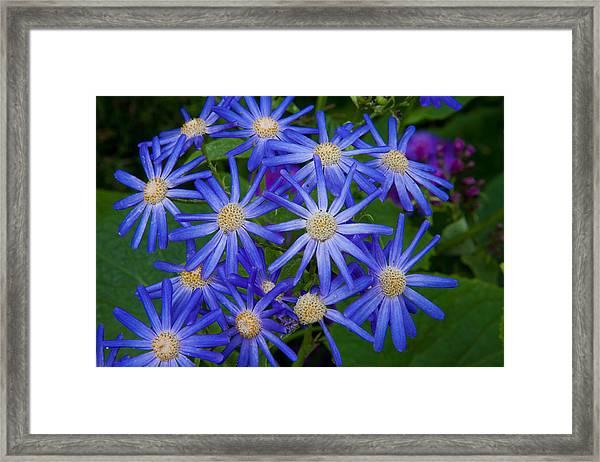 Surreal Flowers Framed Print