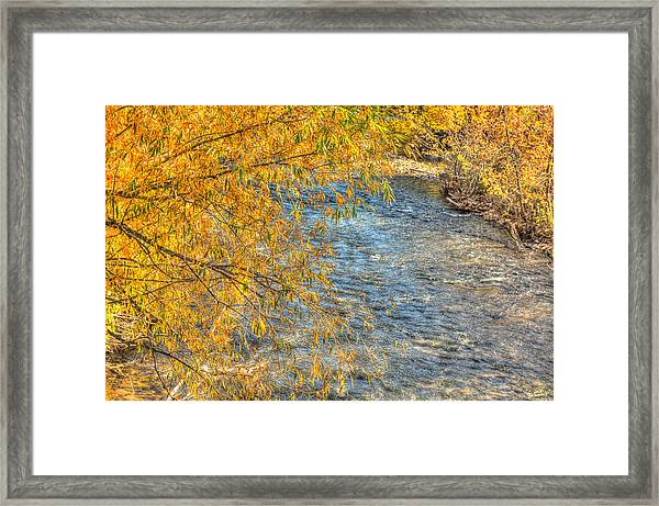 Surrounded By Gold Framed Print