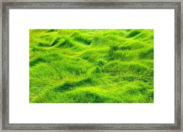Swamp Grass Abstract Framed Print