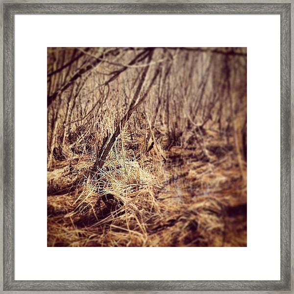 Swamp In Spring Framed Print