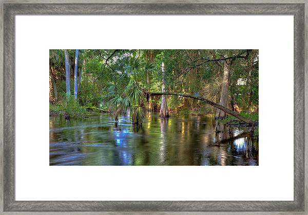 Swamp Life Framed Print