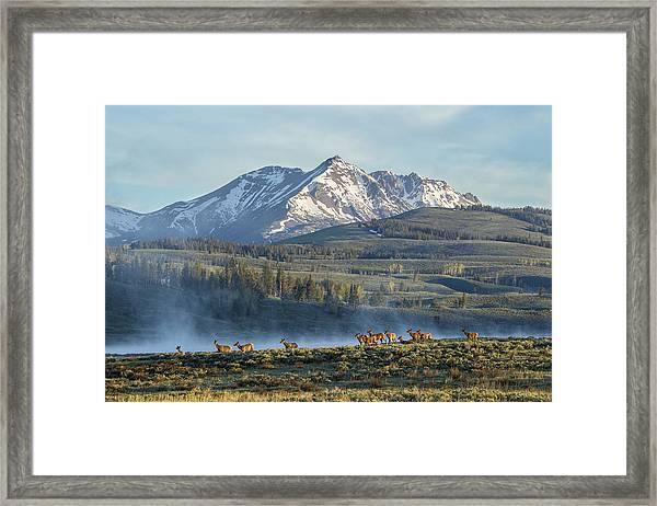 Swan Lake Summer Framed Print