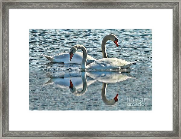 Swan Love Framed Print