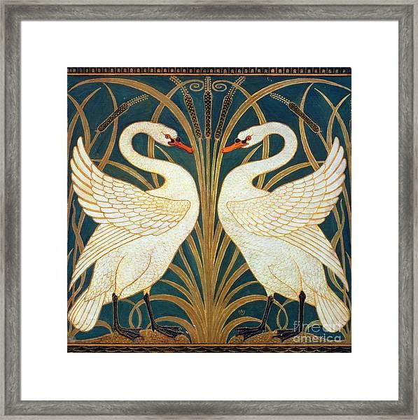 Swan Rush And Iris Framed Print