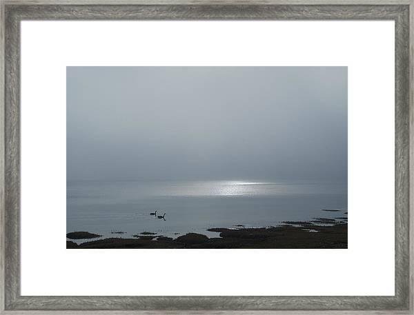 Swans At Sunrise Framed Print