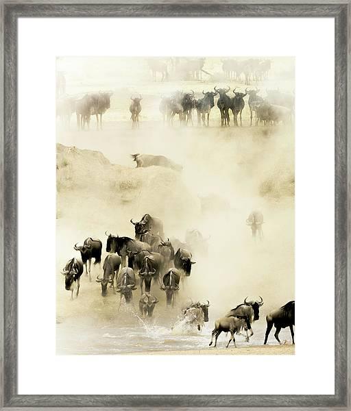 Swarming Framed Print