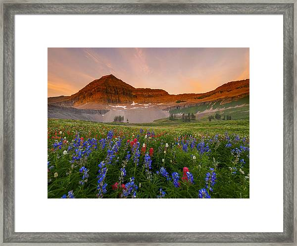 Sweeping Gaze Framed Print