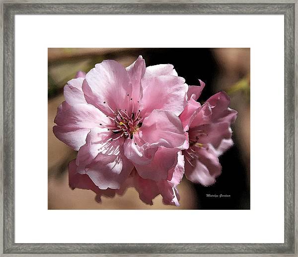 Sweet Blossoms Framed Print