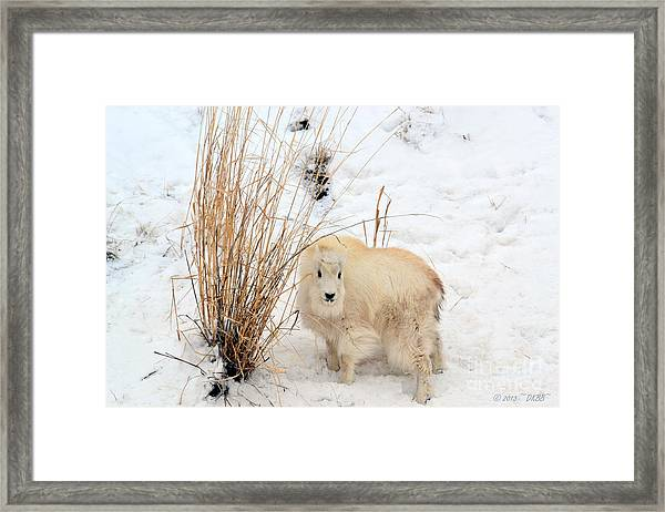 Sweet Little One Framed Print