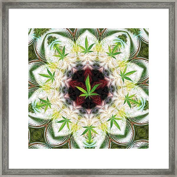 Sweetleaf Mandala Framed Print