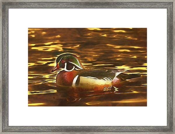 Swimming In A Sea Of Gold  Framed Print