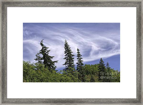Swirling Clouds Crooked Trees Framed Print
