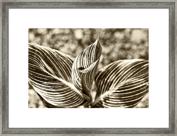 Swirls And Stripes Framed Print