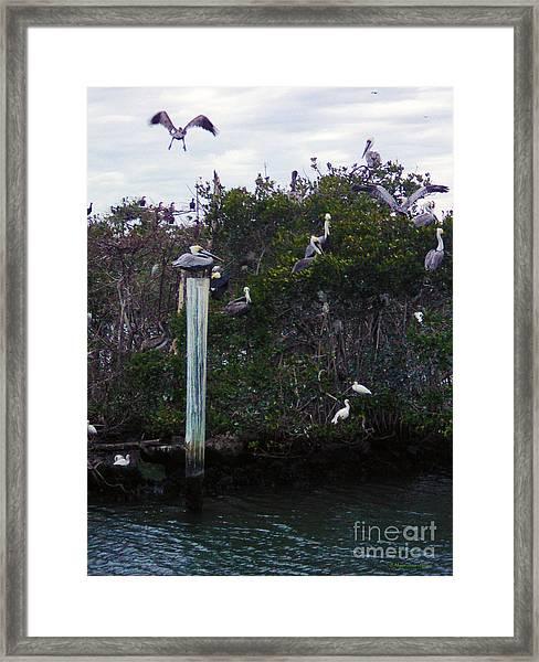 Swooping In Framed Print