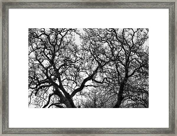 Sycamore And Sky Framed Print