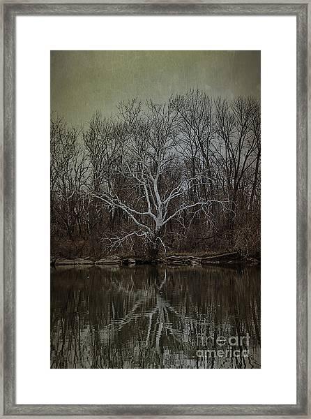 Sycamore Dancer Framed Print