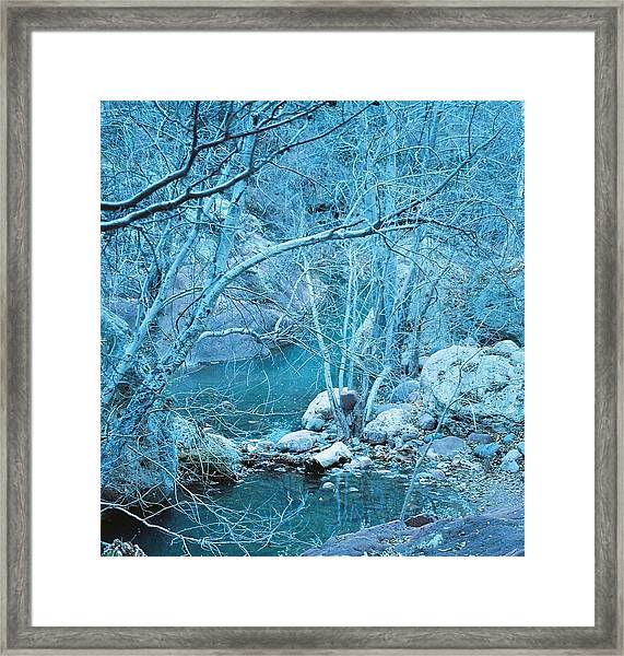 Sycamores And River Framed Print