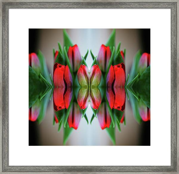 Symmetrical Composite Of Red Tulips Framed Print