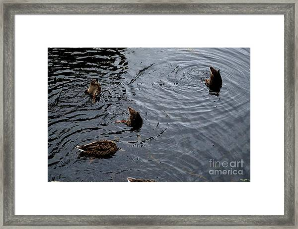 Framed Print featuring the photograph Synchronised Swimming Team by Scott Lyons