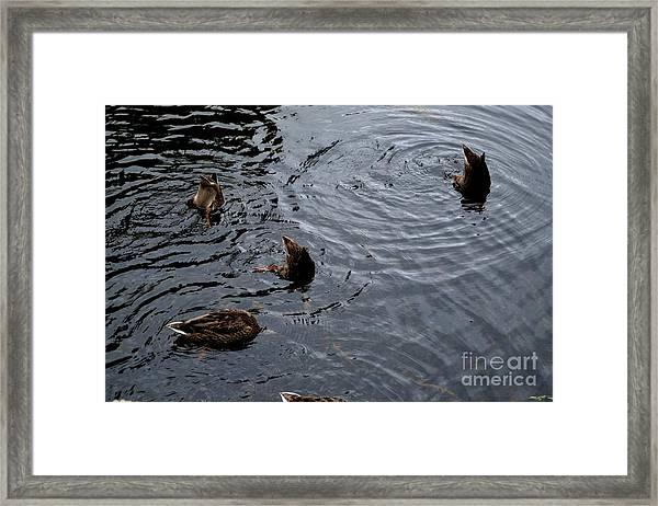 Synchronised Swimming Team Framed Print