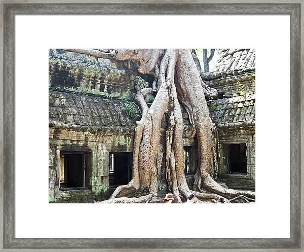 Ta Prohm Temple Framed Print