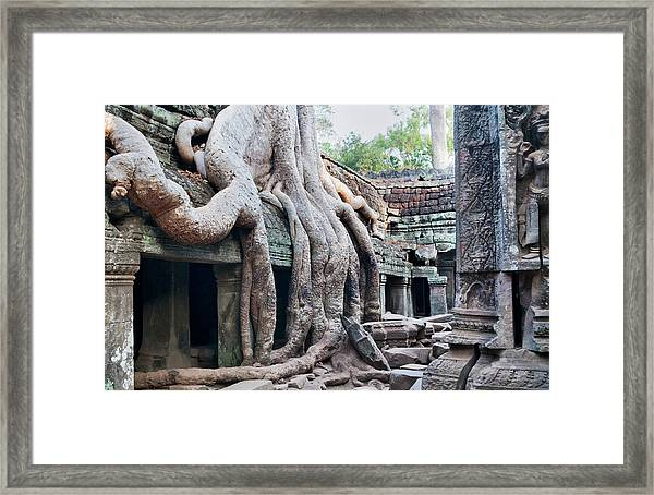 Ta Promh Temple In Angkor Cambodia Framed Print