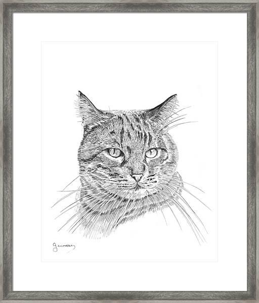 Tabby Framed Print