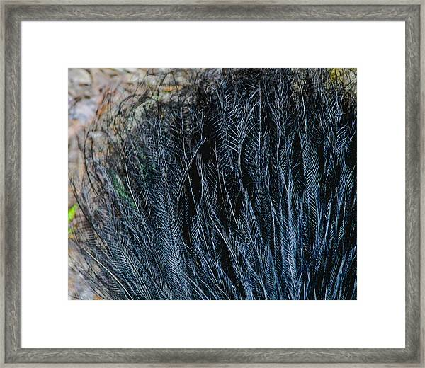 Framed Print featuring the photograph Tail Feathers by Debbie Cundy