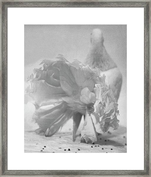 Tail Feathers Of A Pigeon Framed Print