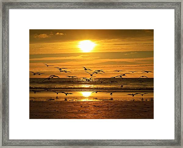 Take Flight At Sunset Framed Print by Donna Pagakis