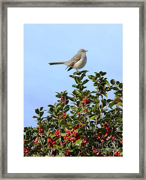 Take My Picture Feb 2014 Framed Print